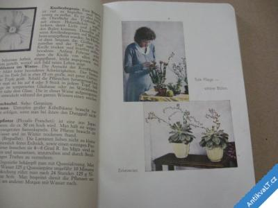 foto    DAS GOLDENE VITELLO BUCH květinářství 194?